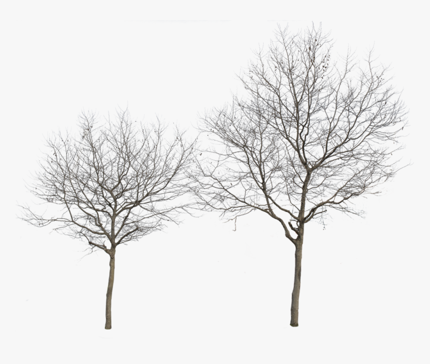 Cut Out Trees Png, Transparent Png, Free Download