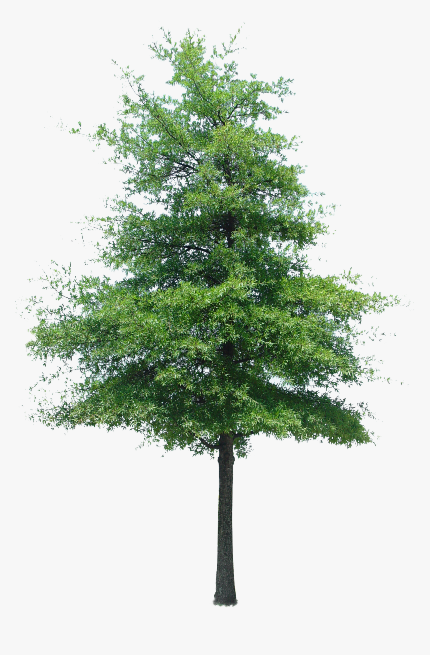 aerial tree png transparent aerial trees png - fir tree cut out photoshop