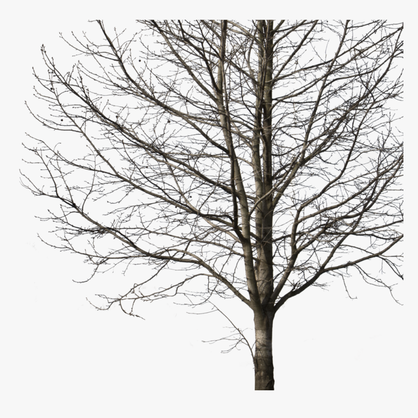 Transparent Png Winter - Tree Png Cut Out, Png Download, Free Download