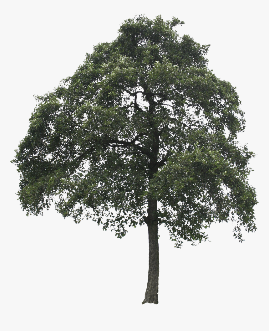 Tree Cut Out Png, Transparent Png, Free Download