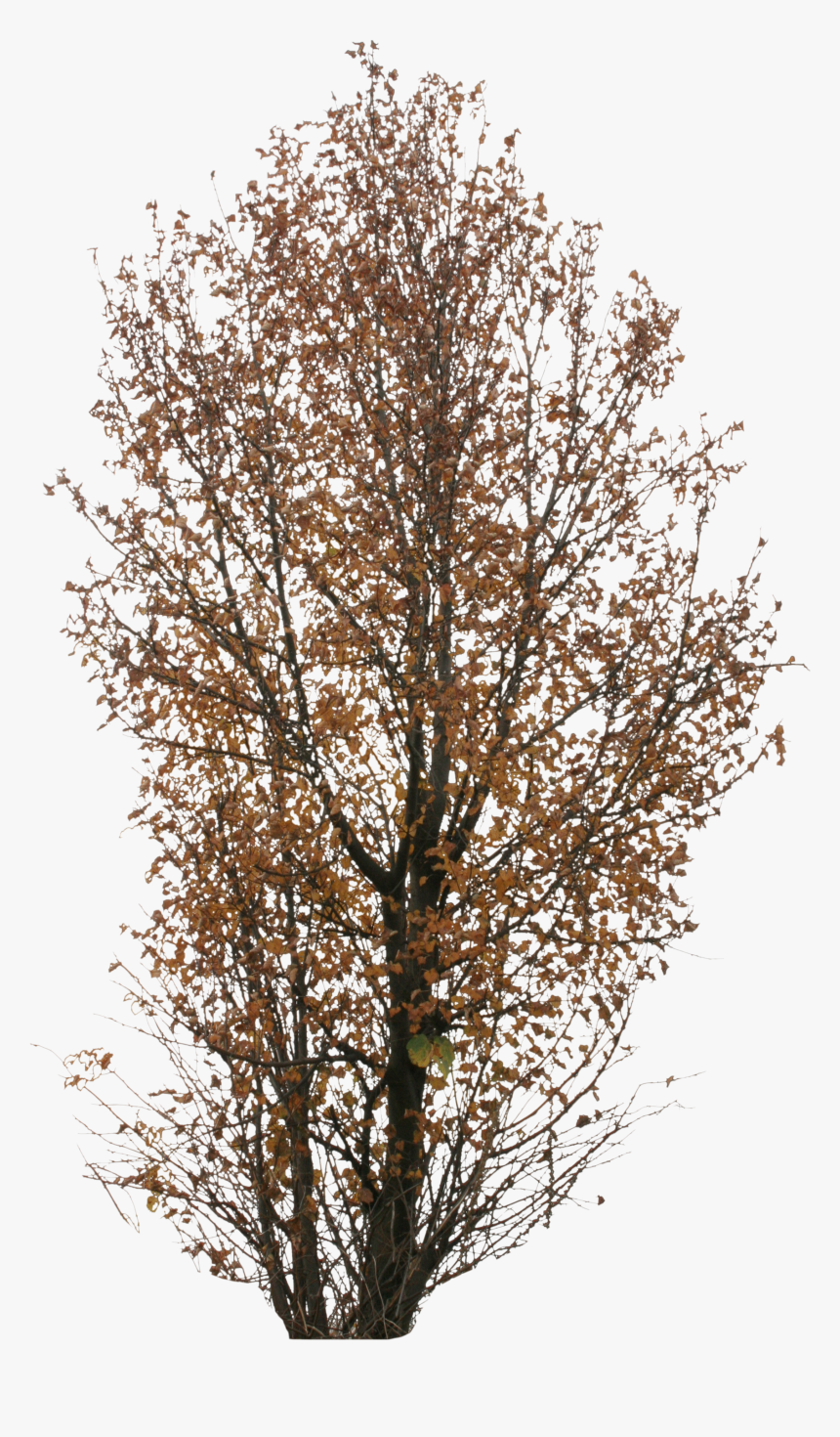 Autumn Tree Png, Transparent Png, Free Download