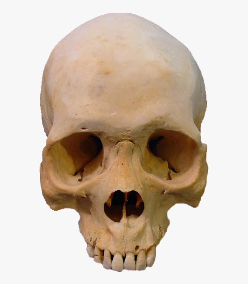 Skeleton Png Free Download - Real Human Skull Png, Transparent Png, Free Download