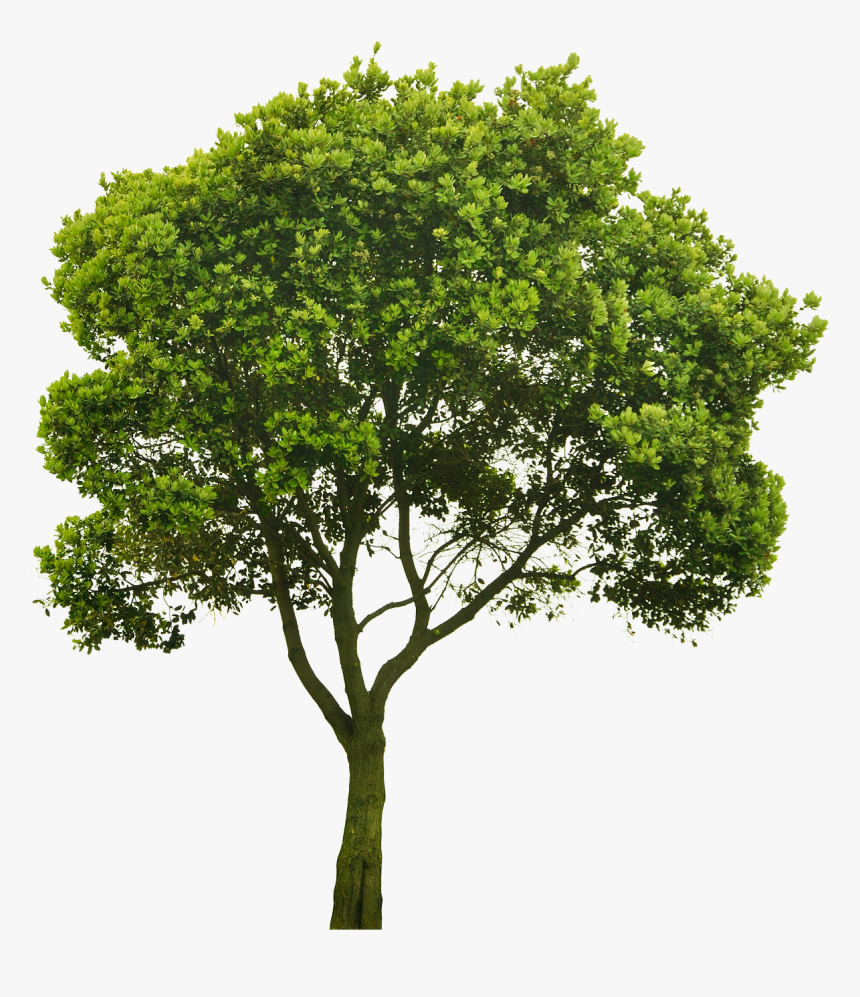 Cutout Tree Png Pinterest - Trees Photoshop Png, Transparent Png, Free Download