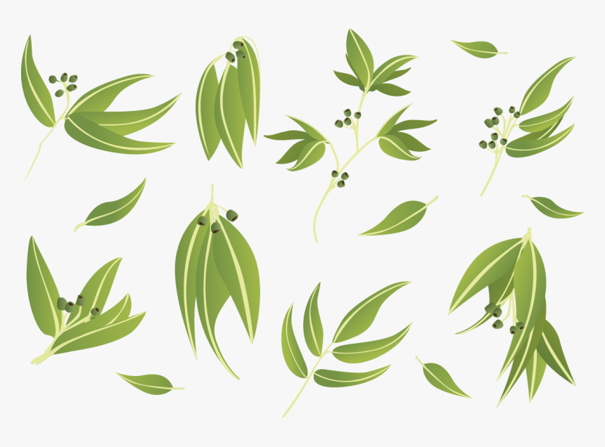 Gum Trees Leaf Euclidean Vector - Gum Trees, HD Png Download, Free Download