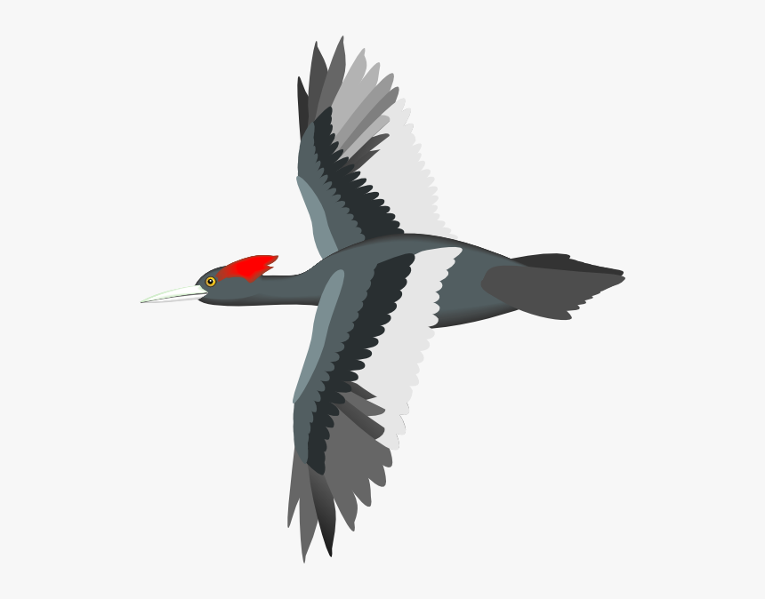 Vector Bird Flying Png, Transparent Png, Free Download