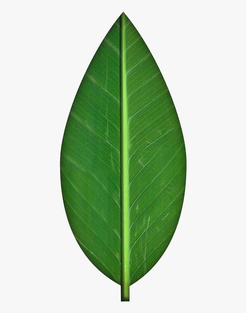 Leaves Transparent Background Clipart - Transparent Background Leaf Clipart, HD Png Download, Free Download