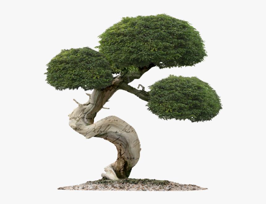 Bonsai Tree Of Life Hd Png Download Kindpng