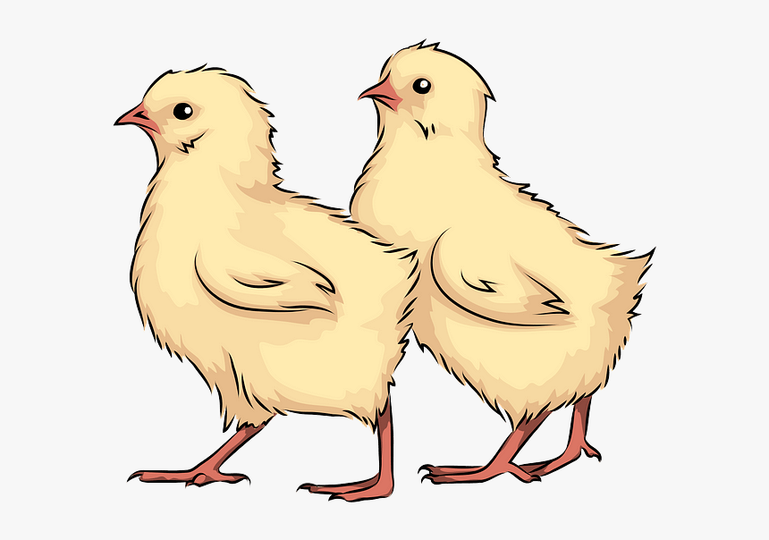 Chicken, HD Png Download, Free Download