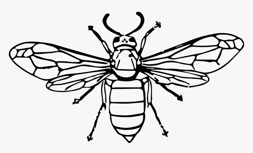 Insect Clip Art Transprent - Hornet Insect Line Drawing, HD Png Download, Free Download