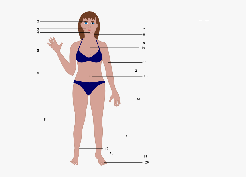 human body cartoon female women body vector png transparent png kindpng human body cartoon female women body