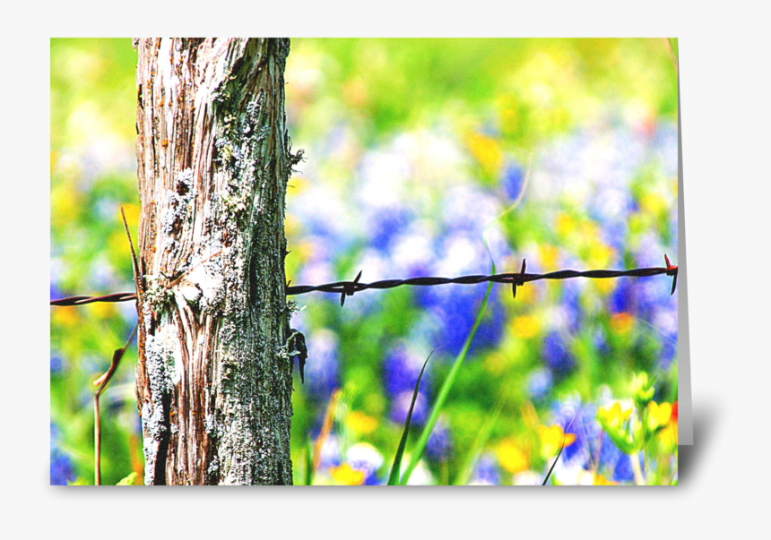 Roadside Beauty Greeting Card - Barbed Wire, HD Png Download, Free Download