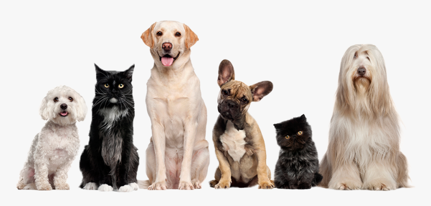 Cat Dog Grooming Pet Sitting - Cat And Dog Image Transparent Background, HD Png Download, Free Download