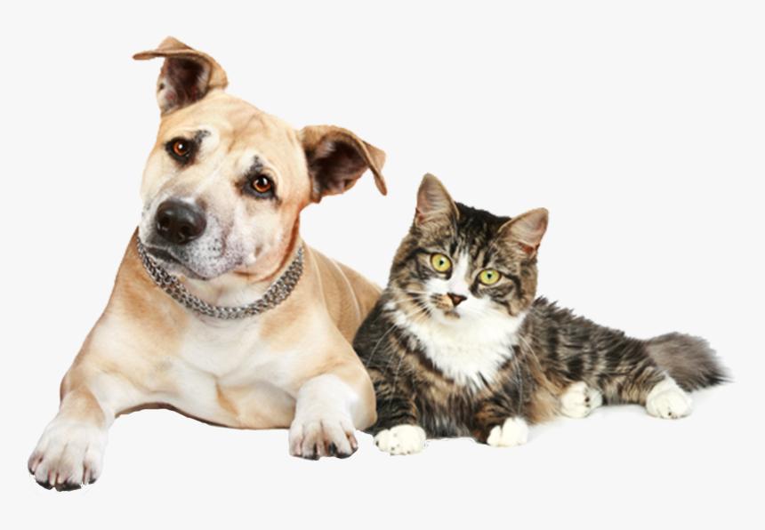 Transparent Dog And Cat Png Dog Cat And Ferret Png Download Kindpng