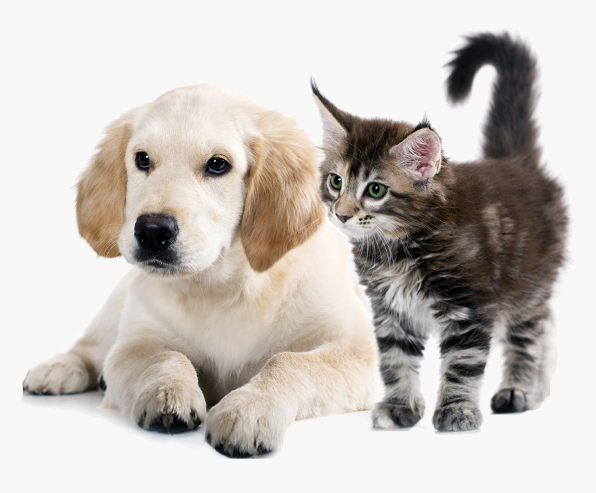 To Medium-sized Cats,whiskers,golden Retriever,companion - Dog And Cat Png, Transparent Png, Free Download