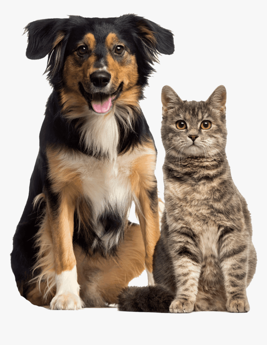 Cat And Dog Cat And Dog Sitting Together Hd Png Download Kindpng