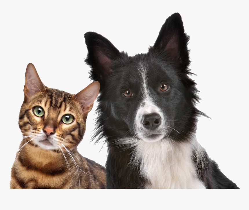 Dog Cat Relationship Dog Cat Relationship Kitten Pet Royalty Free Dog And Cat Hd Png Download Kindpng