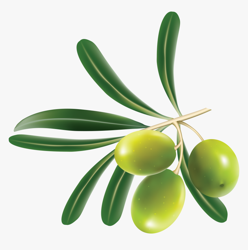 Green Olives Png - Olive Png, Transparent Png, Free Download