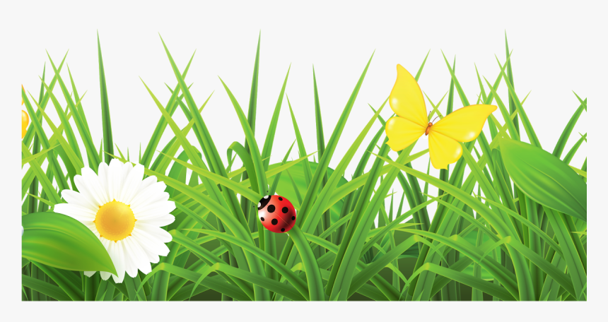 Grass With Flowers Png Hd , Png Download - Flowers Hd Images Png, Transparent Png, Free Download