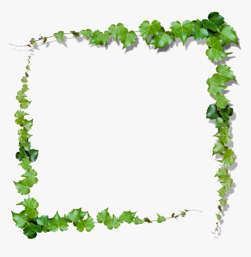 nature frame png ivy frame png transparent png kindpng ivy frame png transparent png