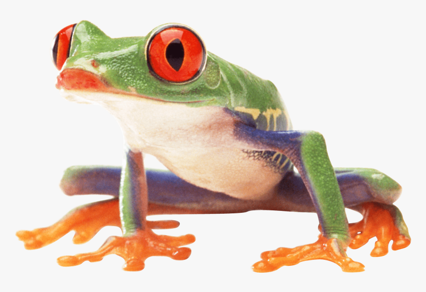 Clown Frog Sideview - Frogs Png, Transparent Png, Free Download