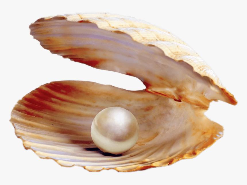 Pearl Png - Clam Pearl Png, Transparent Png, Free Download
