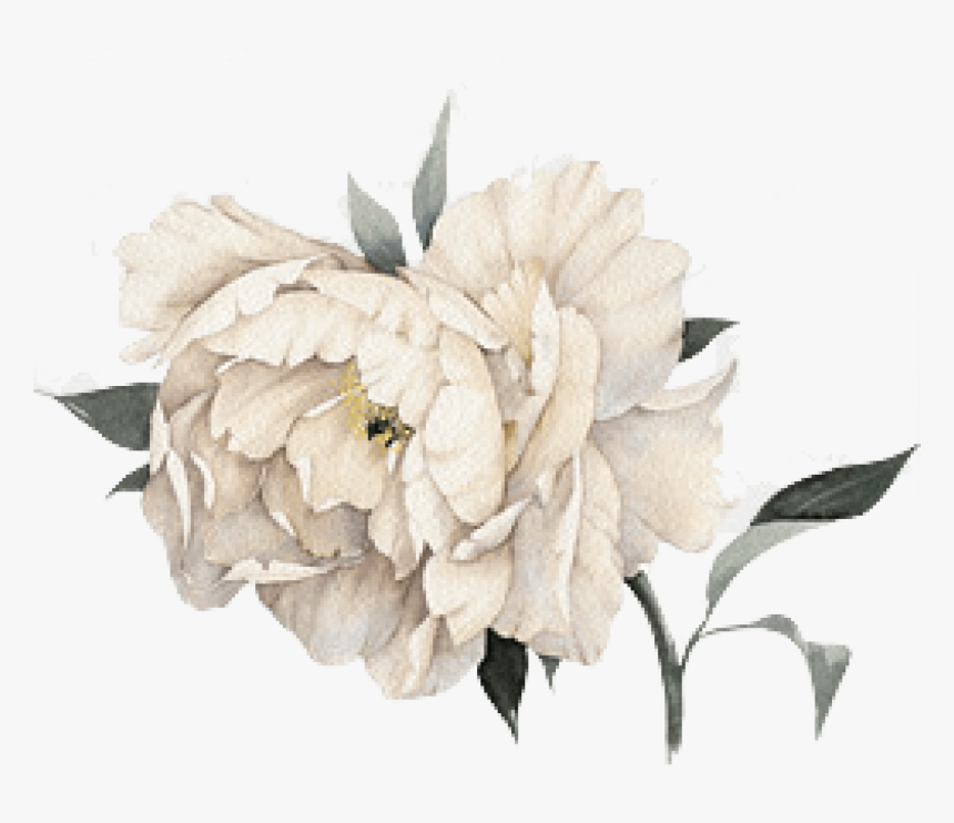 Cropped Peony - Transparent Watercolor White Flower, HD Png Download, Free Download