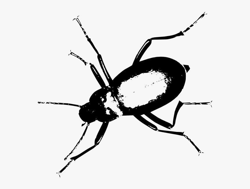 Darkling Beetle Svg Clip Arts - Darkling Beetle Png, Transparent Png, Free Download