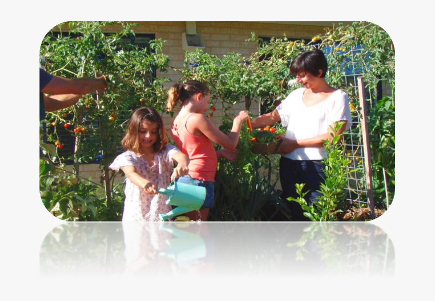 Family Planting Vegetables In The Garden, HD Png Download, Free Download