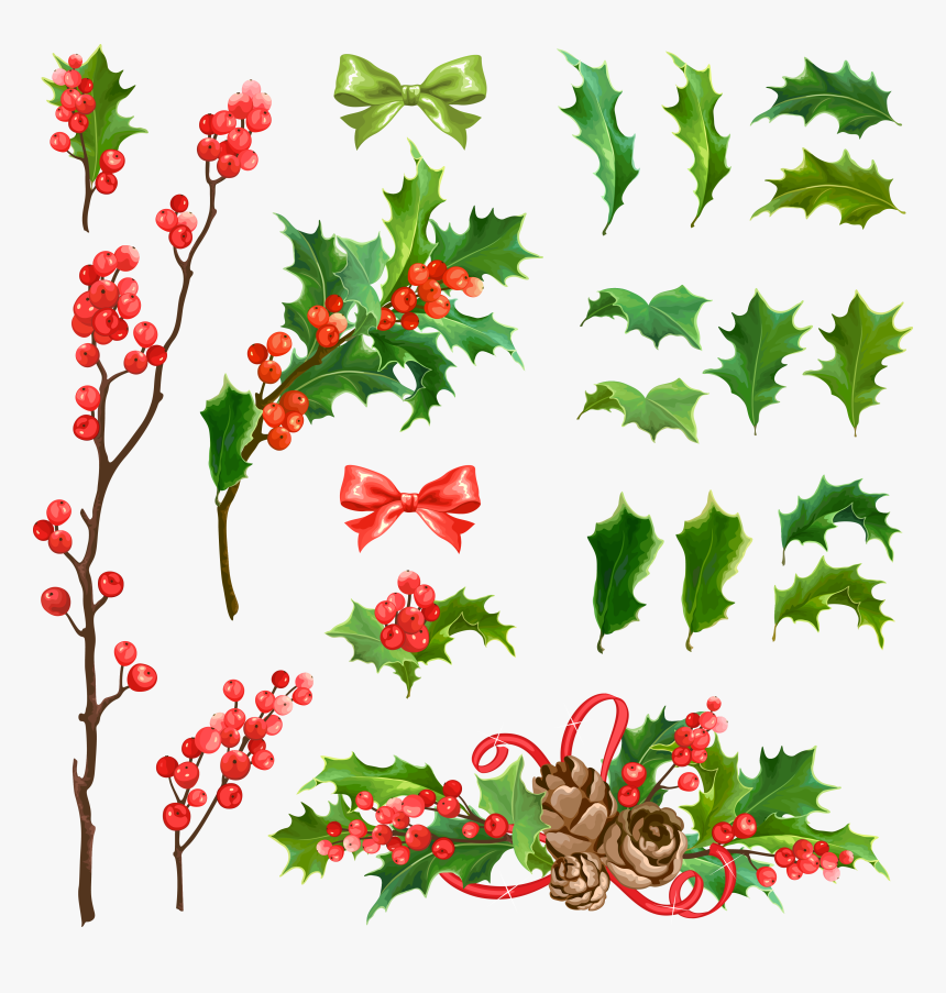 Mistletoe Vector Decoration - 호랑 가시 나무 크리스마스, HD Png Download, Free Download