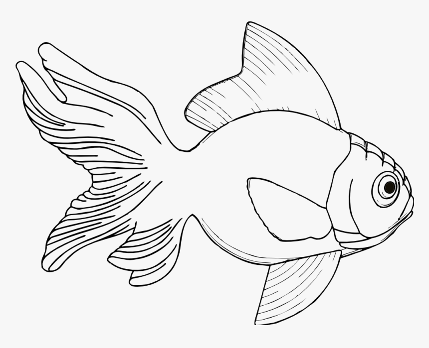 Line Drawings Of Fish, HD Png Download, Free Download