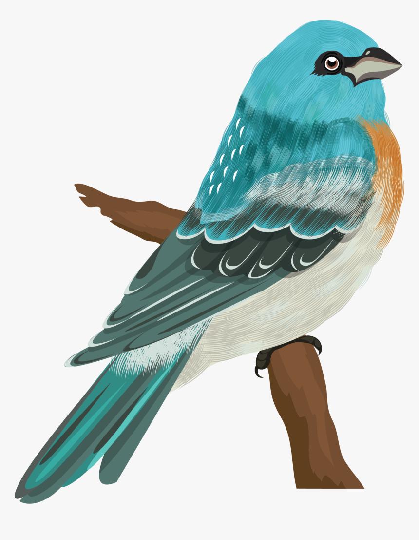 Birds Species, HD Png Download, Free Download