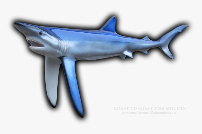 Blue Shark Fish Mount, HD Png Download, Free Download