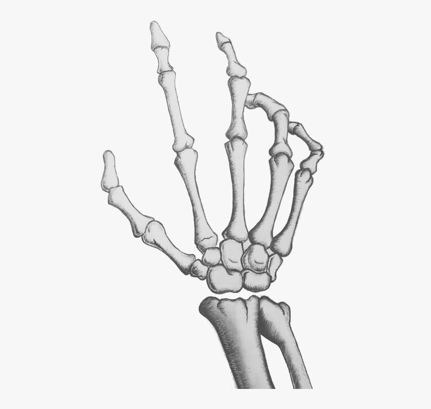 Legs Clipart Skeleton Leg - Drawing Cartoon Skeleton Hand, HD Png Download, Free Download