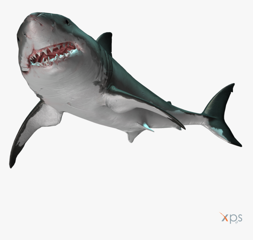 Normaldepthgws - Great White Shark, HD Png Download, Free Download