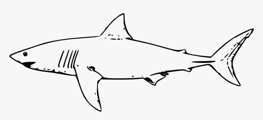 Shark, Fish, Great White Shark, Tiger Shark - Shark Outline, HD Png Download, Free Download