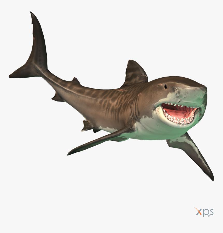The Depth Tiger Shark By Mrunclebingo Dahn3kl Fullview - Tiger Sharks Depth Game, HD Png Download, Free Download