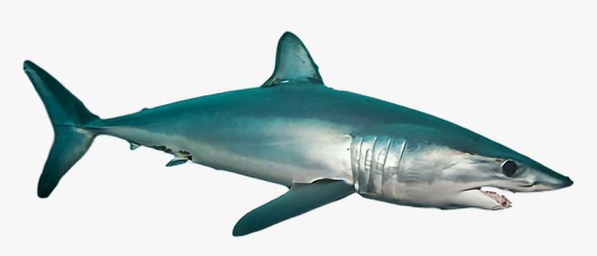 #ftestickers #shark #sea #ocean #fish - Mako Shark Transparent, HD Png Download, Free Download