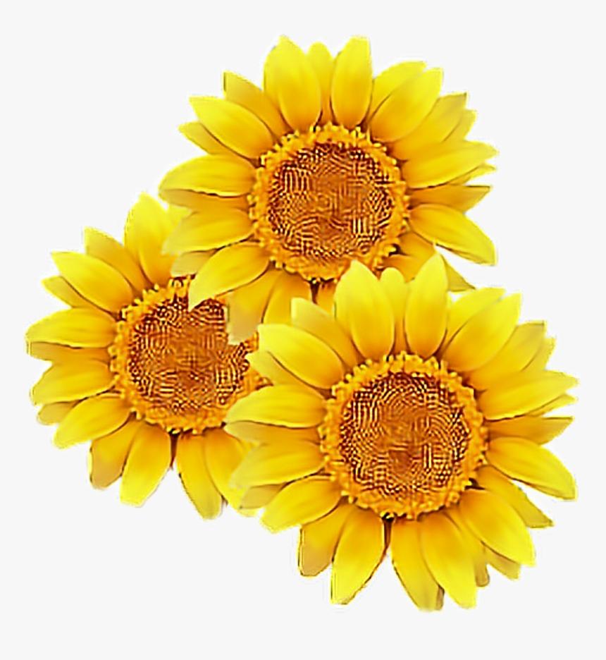 #sunflower #flower #yellow #cute #tumblr #overlay #flowers ...