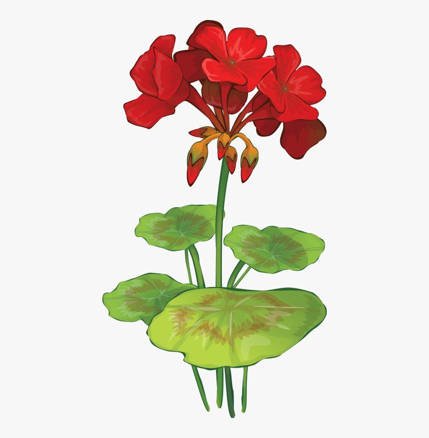 Summer Flowers Clip Art - Geranium Clip Art, HD Png Download, Free Download