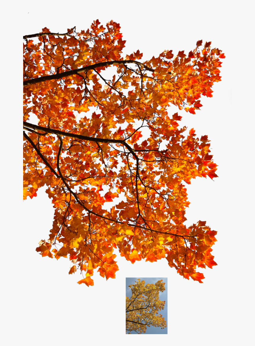 Autumn Leaves 3 Stock By Astoko Fall Tree Transparent Background