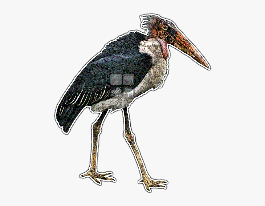 Marabou Stork Lineart, HD Png Download, Free Download