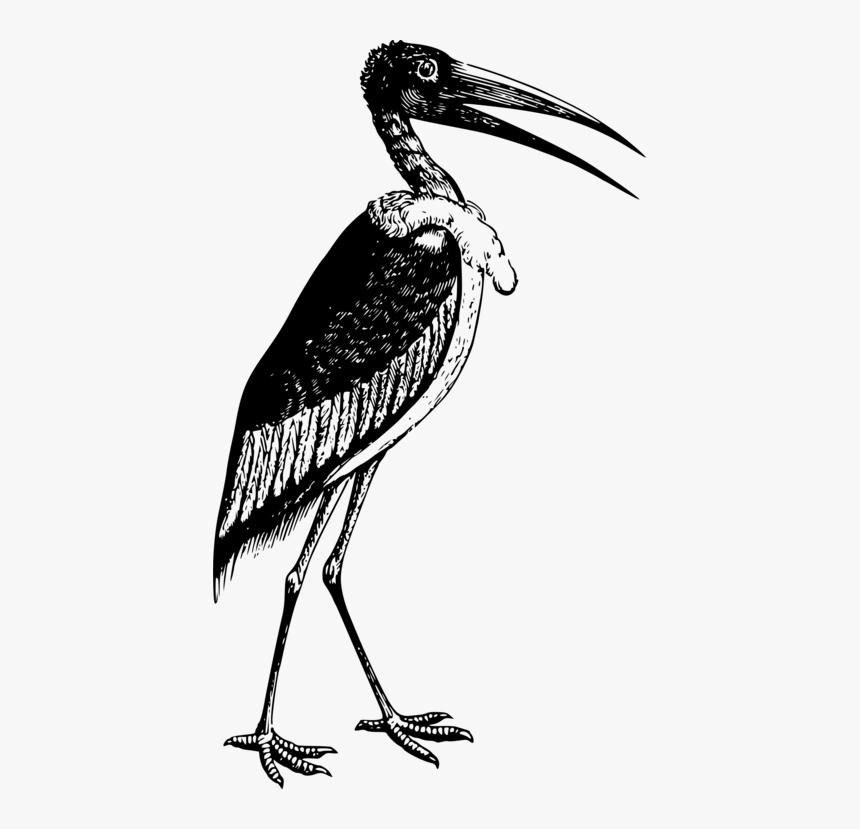 Bird Gambar Burung Bangau Animasi Hd Png Download Kindpng