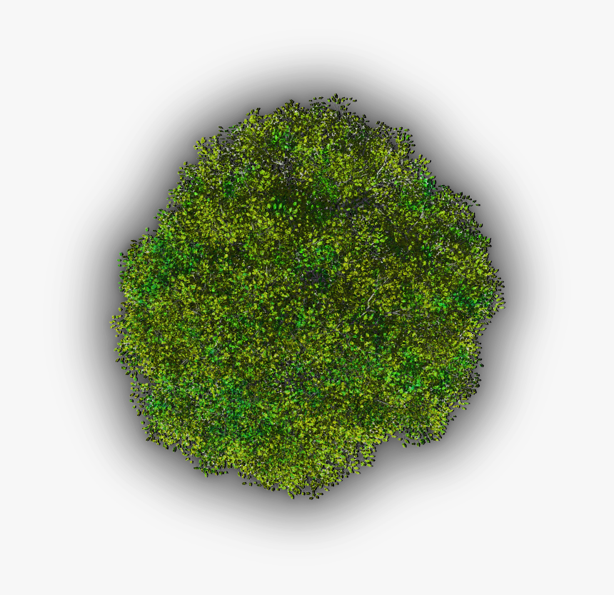 Moss, HD Png Download, Free Download