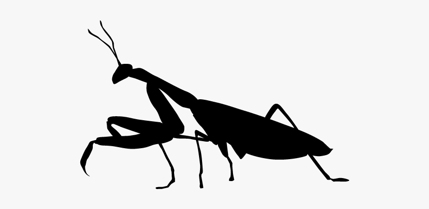 Grasshopper Silhouette Transparent, HD Png Download, Free Download