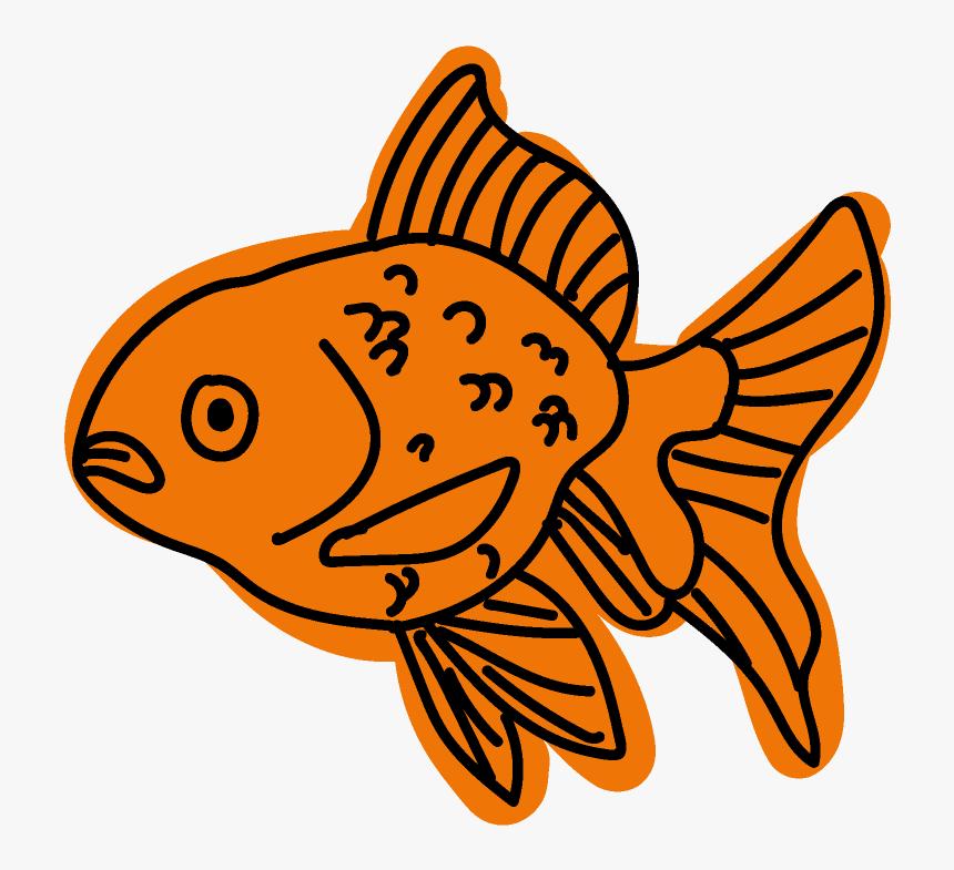 University Of North Texas Biol 1760 Lab Presentation - Coral Reef Fish, HD Png Download, Free Download