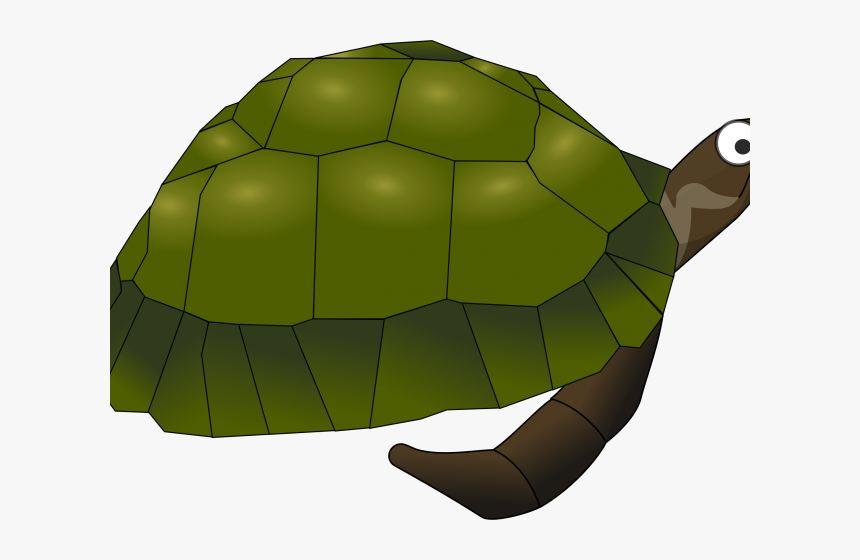 Transparent Green Sea Turtle Clipart - Sea Turtle Clip Art, HD Png Download, Free Download
