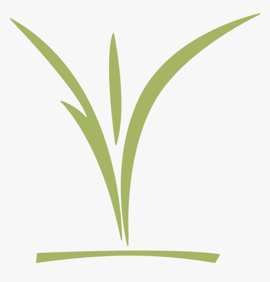 Ccc Childrens Logo Green - Grass, HD Png Download, Free Download