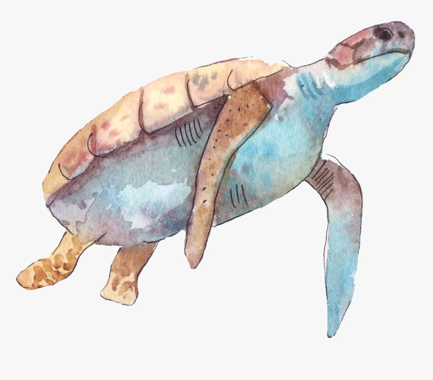 Cartoon Turtle Png Transparent Fish And Sea Turtles Drawings