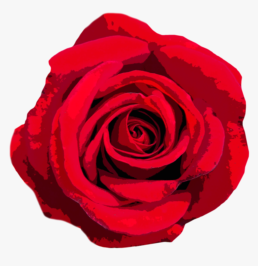 Rose Love Valentine S Day Free Photo National Flower Of United States Of America Hd Png Download Kindpng