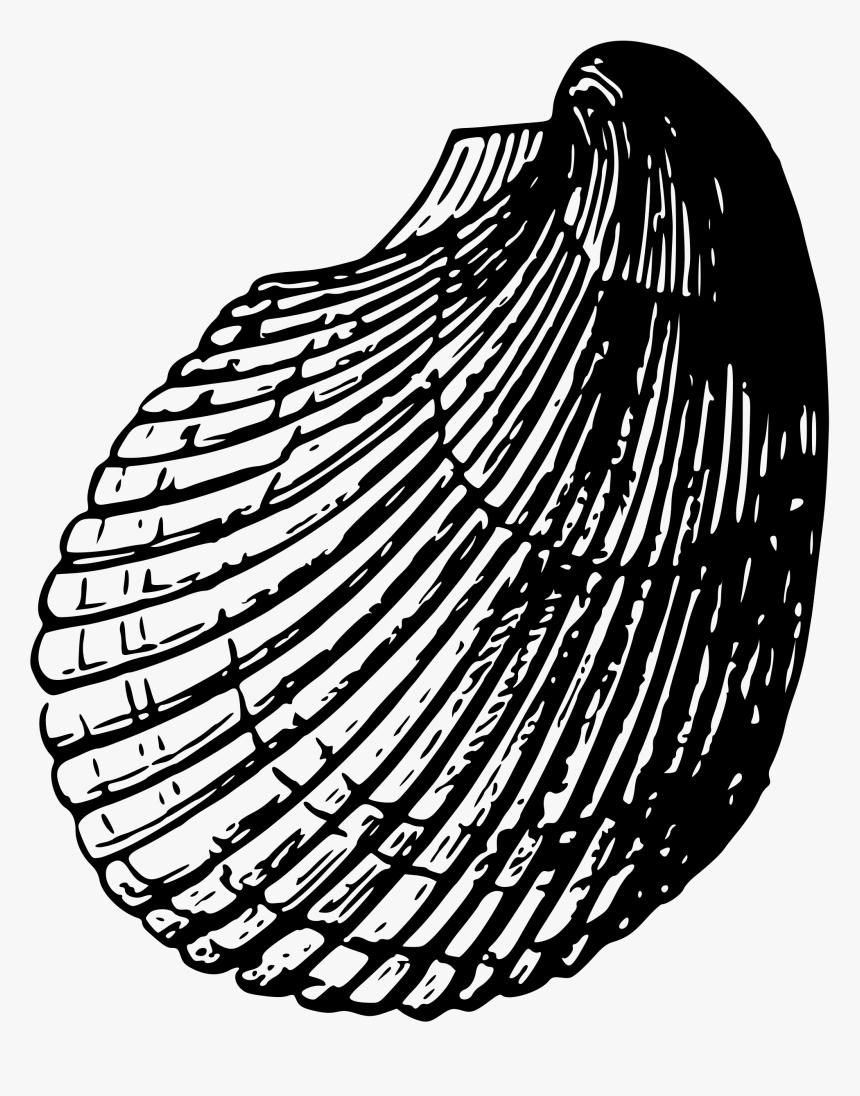 Transparent Sea Shells Sketsa Gambar Kerang Laut